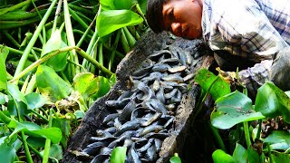 Wow Unbelievabel! A Lot of fishes Dry Water Under Palp Tree and Humor Was Caught By A Fisherman
