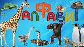 Развивающий мультик для детей.  Алфавит с животными.  Учим буквы А-Я.  Азбука для малышей