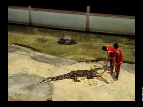 crocodile show in thailand 2010-xiếc cá sấu hay và hồi hộp- phuochoadilac- phan 1.mp4