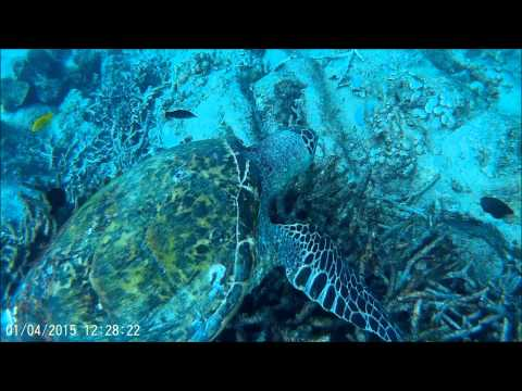 Underwater Wonders of the Seychelles - Turtles