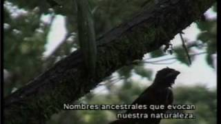 Campesina Santandereana -Silva y Villalba- (Música Colombiana)