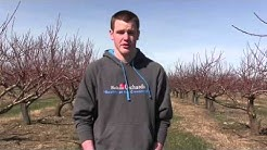 Bolton Orchards Interview
