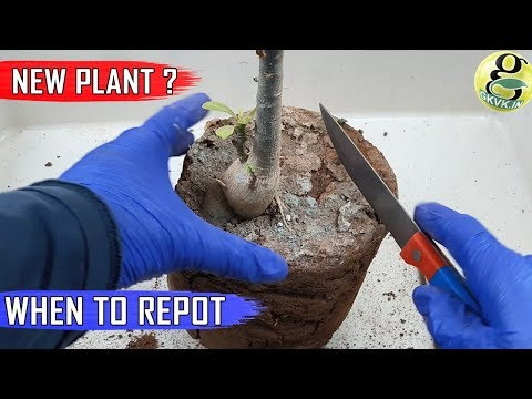 NEVER DO THIS! WHEN TO REPOT NEW PLANT: From a Garden Store Nursery or Online – Garden Tips
