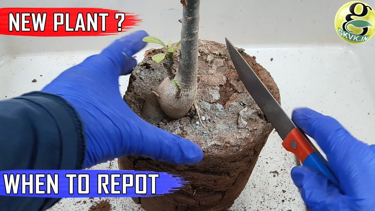 WHEN TO REPOT NEW PLANT: From A Garden Store Nursery Or Online U2013 Garden Tips