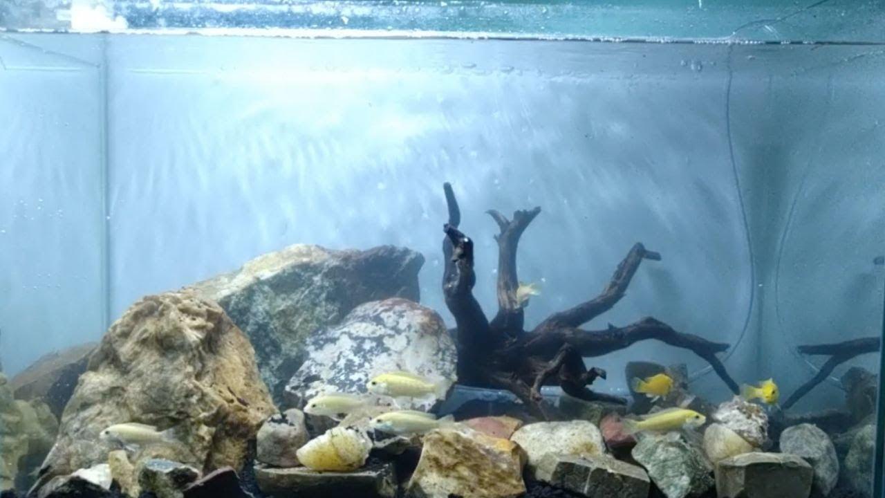 Menghias Aquarium Ikan Hias Air Tawar Dengan Batu Tanpa Tumbuhan Youtube Hiasan akuarium air tawar
