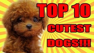 TOP 10 CUTEST DOGS 2016 / 2017