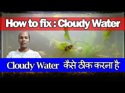 Cloudy Water Kayse Thik Kare   How To Fix A Cloudy Fish Tank