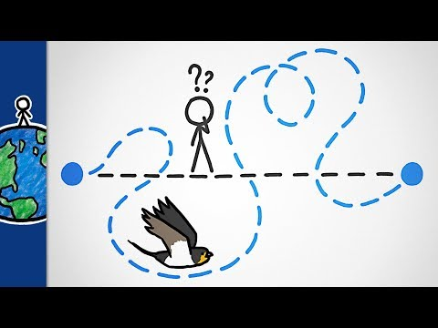 Why Do Birds Migrate Like This?