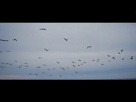 """""""Watermark"""" - Sleeping At Last (Micro Music Video)"""
