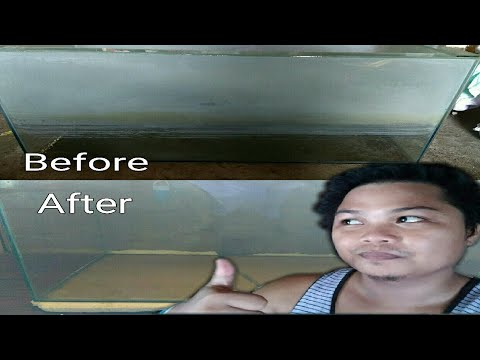 How to Clean the watermark on the Quarium | Aquarium Tank | LivesbearerAquatics