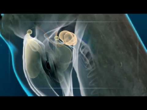 Любительницы много спермы видео