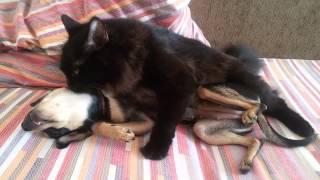 Кошка с собакой!!! Любовь есть на свете!!!