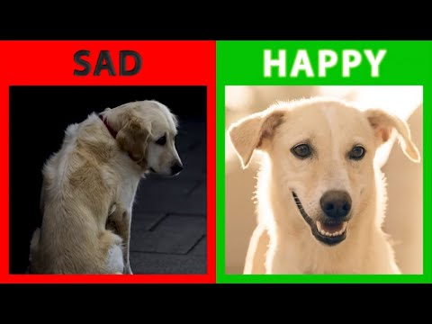 🐕-is-your-dog-happy-or-sad?-top-10-signs-your-dog-is-happy-with-you!