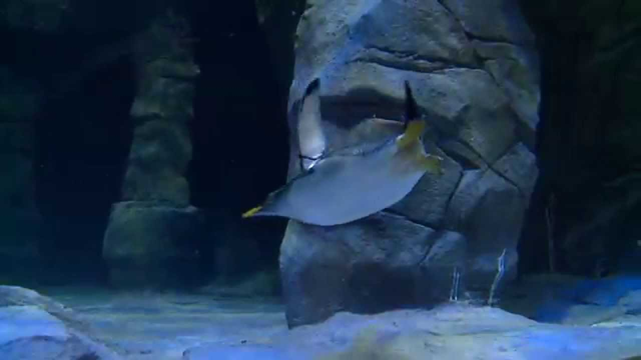 Loveland Living Planet Aquarium NOW OPEN! - YouTube