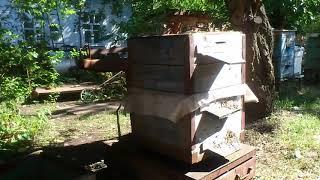 Если пчелосемья ослабла к осени, то зачем она нужна?