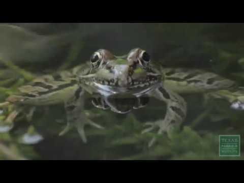 My Frog Pond