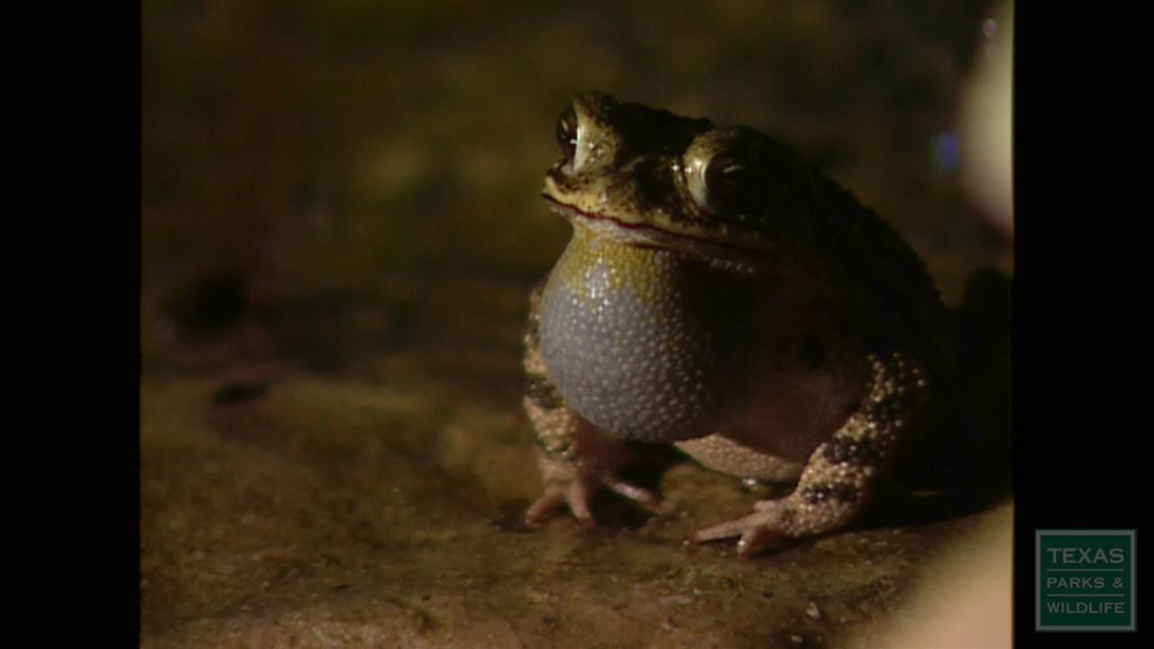 my frog pond youtube