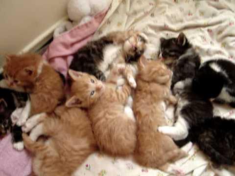 Cute Sleeping Kittens