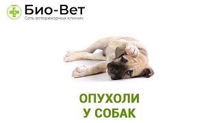 Опухоли у собак. Ветеринарная клиника Био-Вет.