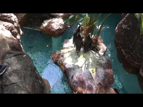 Field Trip To Dallas World Aquarium Harry Myers Park Youtube