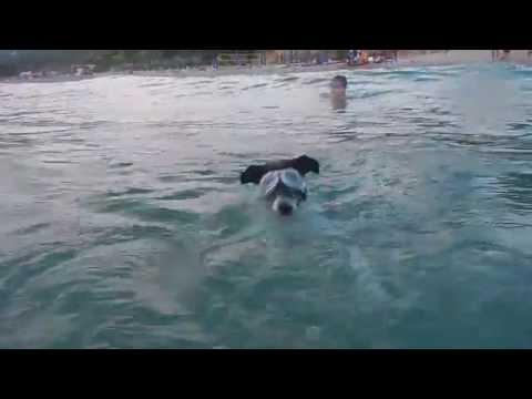 Pongo the sea dog! Pongo il cane marino
