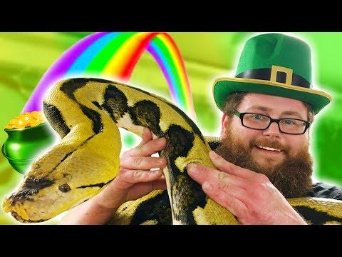 HUGE PYTHON HELPS A LEPRECHAUN FIND HIS GOLD! **St Patricks Day** Brian Barczyk