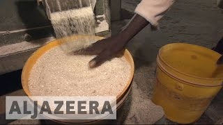 Will Kenya revolutionise Africa's rice production?