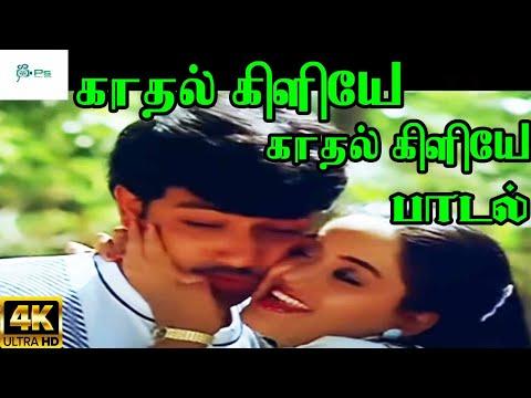 Kadhal Kiliye Kadhal Kiliye ||காதல் கிளியேகாதல் கிளியே||Mano, S. Janaki ||Love Duet Melody H D Song