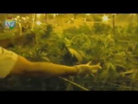 Une plantation géante de cannabis dans un tunnel du métro parisien HD