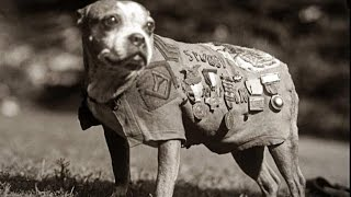 Amazing Archival Footage of Parachuting Military Dogs