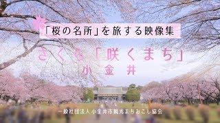【小金井市】さくら「咲くまち」小金井 - 東京・小金井市内の「桜の名所」を旅する映像集