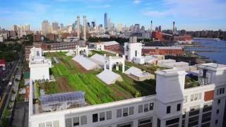 Brooklyn Grange Rooftop Farm #2 - Project of the Week 6/6/16