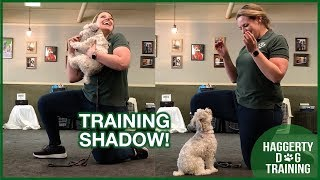 TRAINING with SHADOW!