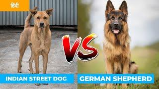 Indian Street Dog vs German Shepherd in Hindi | Dog VS Dog | PET INFO