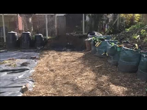 Quest for veg - our woodchip path and alternative wheelbarrow
