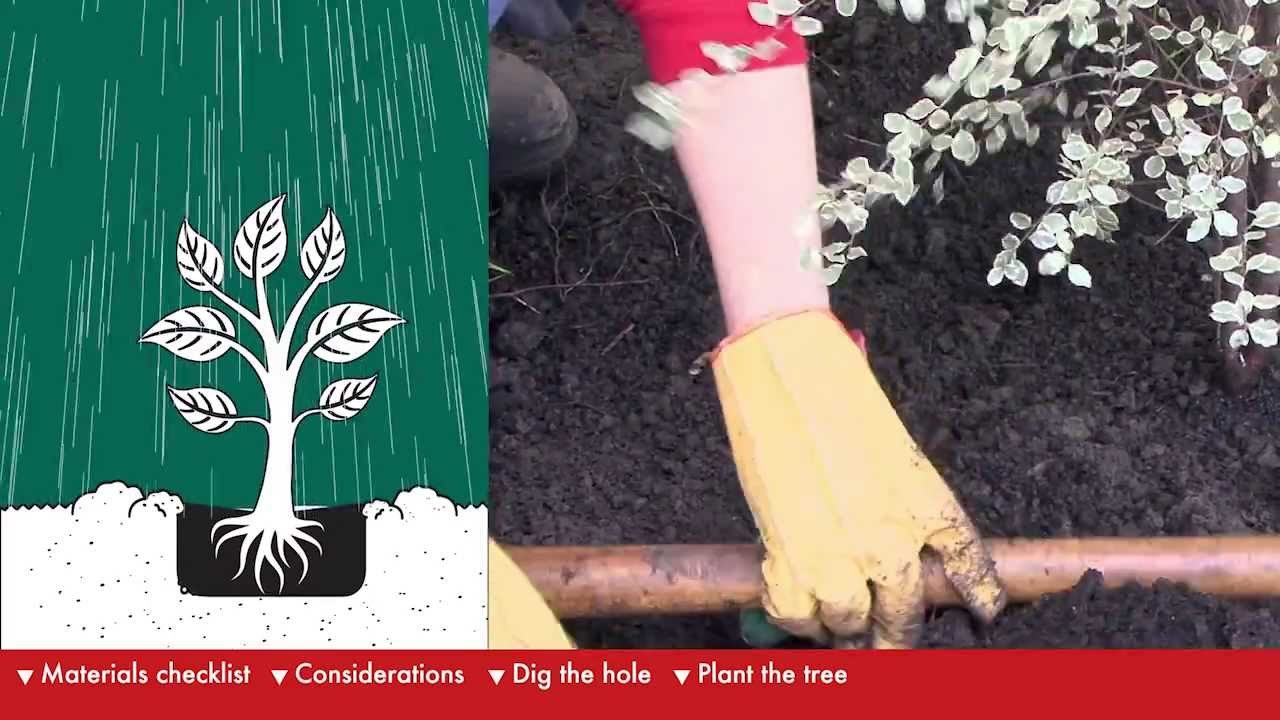 How To Plant A Tree - DIY At Bunnings