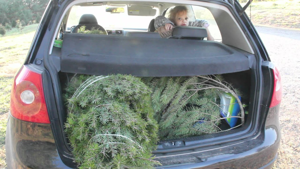 Today We Learn How To Cut Down A Christmas Tree - YouTube