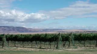 The Story of Idaho Wine