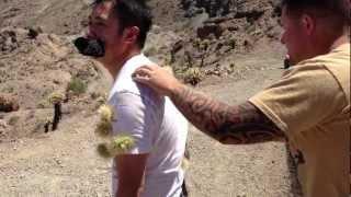 Cholla Cactus Attack