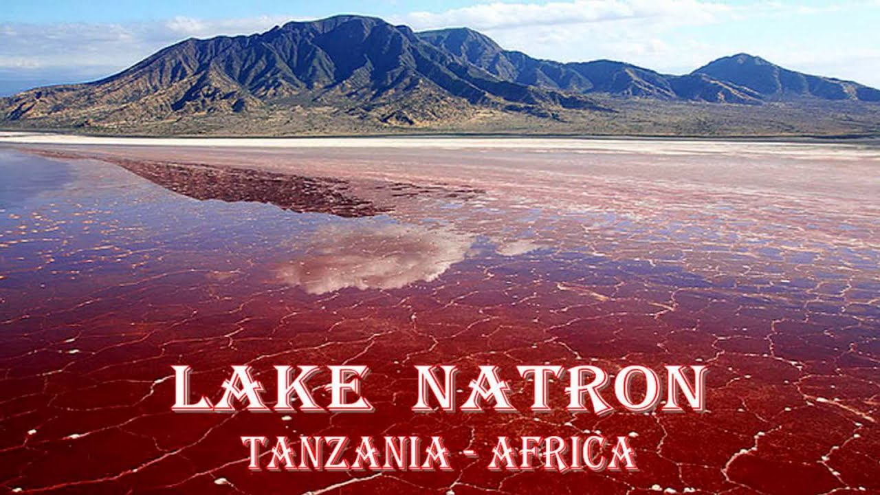 Danau Darah Natron Tanzania