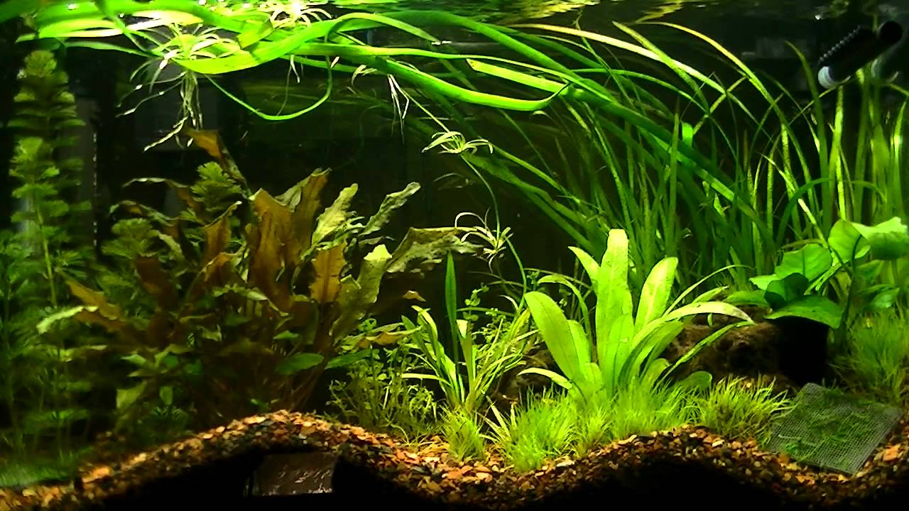 my planted aquarium dirt substrate
