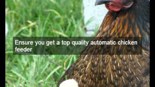 Automatic Chicken Feeder | Yolo | Ca | Galvanized | Chicken Feeders | Treadle | Pheasant | Poultry