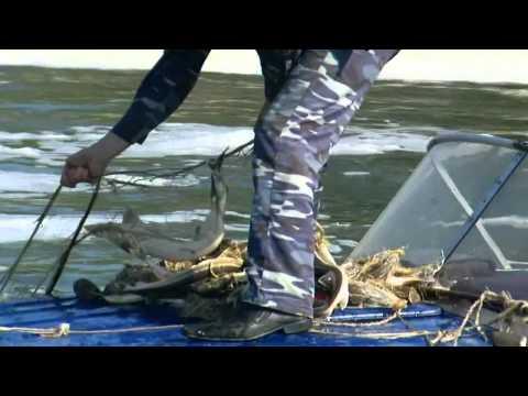 браконьерские лодки на волге