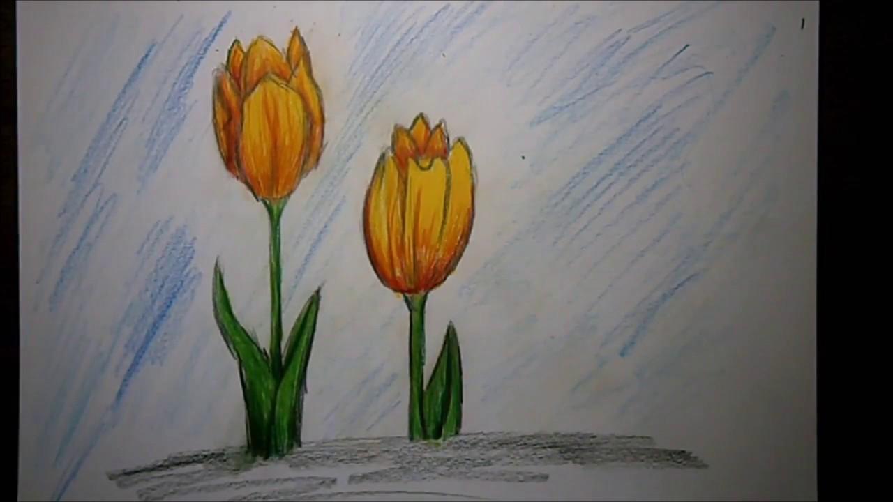 Tulpe zeichnen lernen  YouTube