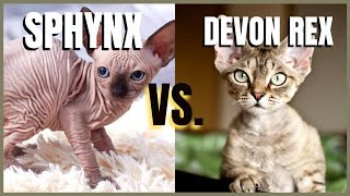 Sphynx Cat VS. Devon Rex Cat