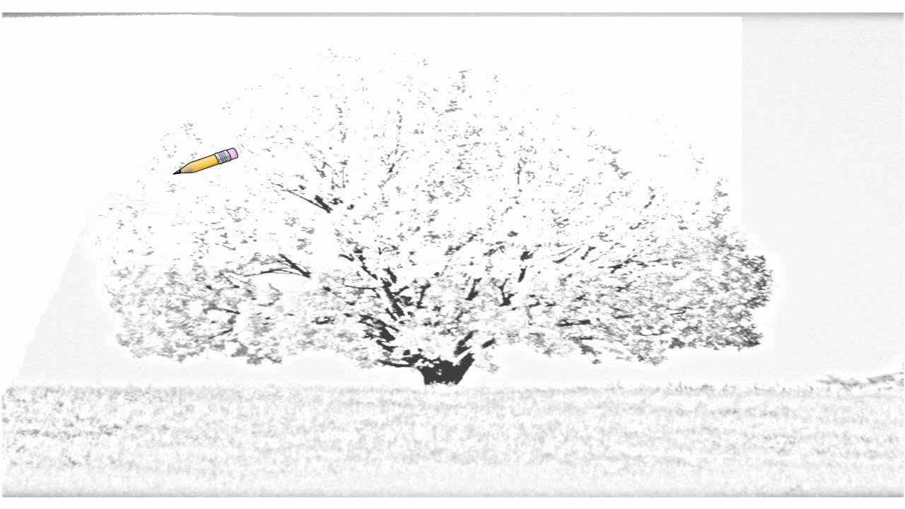 auto draw 2  colorful maple tree