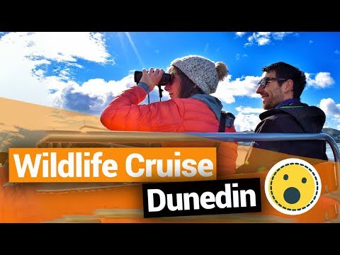 Monarch Wildlife Cruise in Dunedin  –  New Zealand's Biggest Gap Year – Backpacker Guide New Zealand
