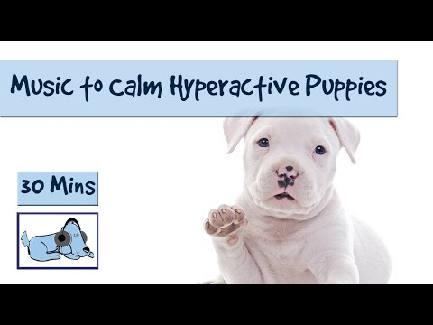 30 Minutes of Dog Music to Calm Down Hyperactive Puppies!