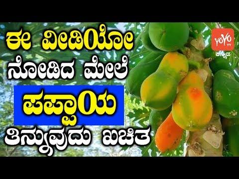ಈ ವೀಡಿಯೋ ನೋಡಿದ ಮೇಲೆ ನೀವು ಪಪ್ಪಾಯ ತಿನ್ನುವುದು ಖಚಿತ ! Amazing Health Benefits Of Eating Papaya Kannada