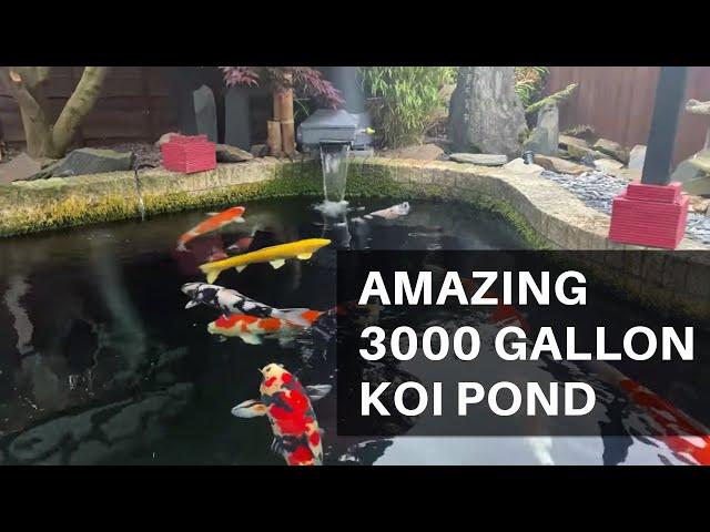 Amazing 3000 gallon Koi Pond, and SUPERB BONSAI!! *MUST WATCH*